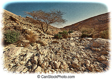 Vintage Image of the Negev Desert in Israel.