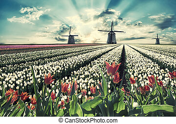 Vintage landscape with tulips and windmill