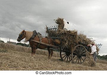 Vintage manual harvest, men working in a field
