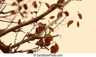 Vintage moving autumn leaves