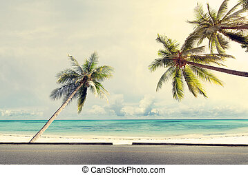 coconut palm tree on tropical beach blue sky
