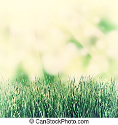 Vintage Nature Background with Grass