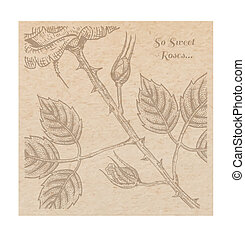 Vintage old paper texture with engraving slyle rose background, scrapbooking victorian style page, hand drawn vector illustration