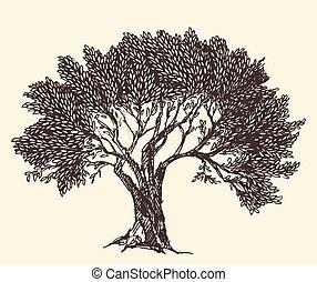 Vintage Olive Engraved Background Illustration