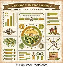 Vintage olive harvest infographic