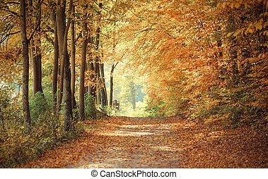Vintage photo, Landscape, view of path in autumnal park