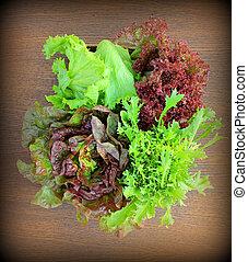 Vintage photo of lettuce - Green and red lettuce (iceberg, ...