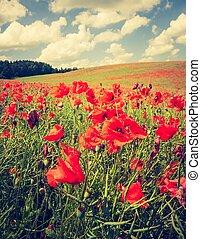 Vintage photo of poppy field