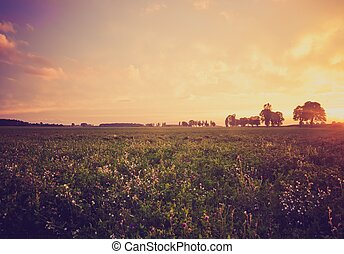 Vintage photo of sunset over trees an field