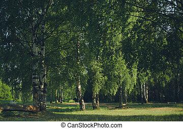 Vintage photo quiet forest