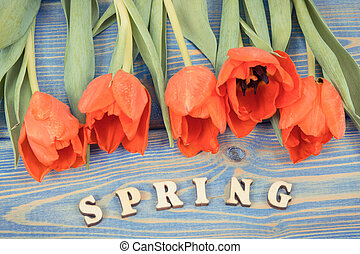 Vintage photo, Red tulips for different occasions and inscription spring on blue boards