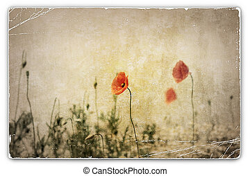 Vintage Photograph of Poppies in Field
