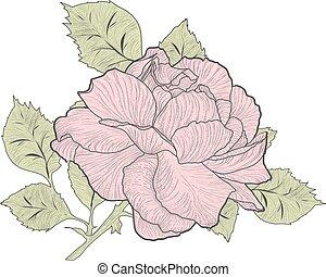 Vintage Pink Rose