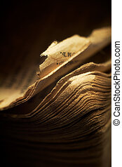 Vintage religious book - the edges of pages. Macro; shallow ...