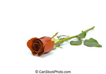 vintage rose isolated on white background
