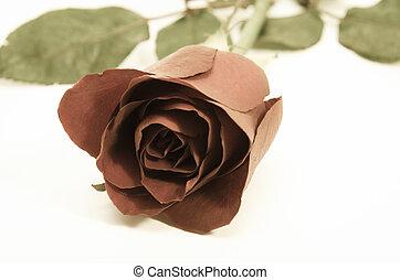 vintage rose on background