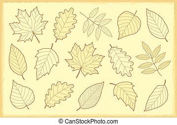 vintage set of autumn leaves