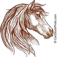 Vintage sketch of head of a wild horse - Vintage engraving...
