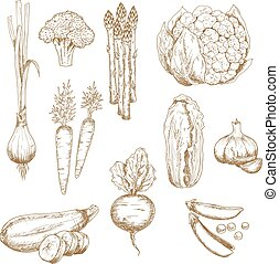 Vintage sketches of farm vegetables - Vintage sketches of...