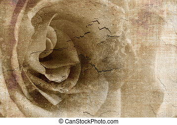 Vintage soft rose with sepia touch and rich texture