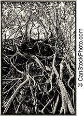 Vintage style Banyan tree roots - Vintage editing of...