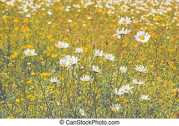 Vintage style landscape of wild flowers in a summer meadow