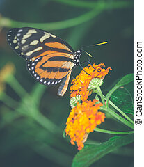 Vintage style orange butterfly