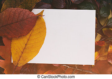vintage toned autumn leaves for background with paper card, from above
