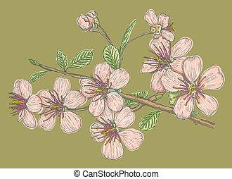 Pink sakura on green background.