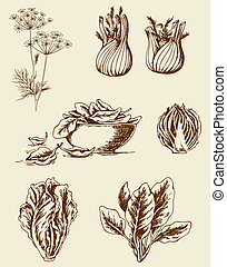 Vintage vegetables - Set of vector vintage hand drawn...