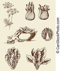Vintage vegetables - Set of vector vintage hand drawn ...