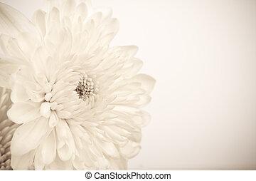 Vintage White Flower
