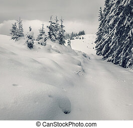 Vintage winter landscape in the forest
