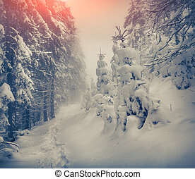 Vintage winter sunrise in the mountain forest