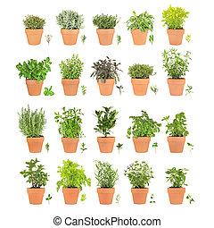 vinte, ervas, em, potes, com, folha, sprigs