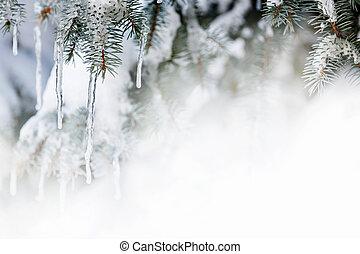vinter, bakgrund, med, istappar, på, gran träd