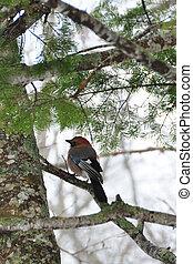 vinter, branch, fugl