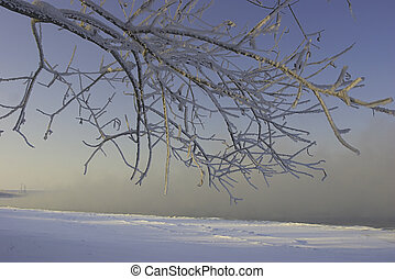 vinter, dimma