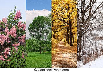 vinter, fjäder, collage, höst, träd, fyra kryddar, sommar