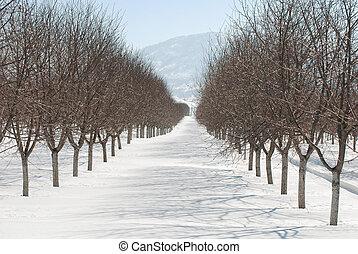 vinter, fruktträdgård
