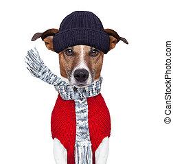 vinter, hund, scarf, och, hatt