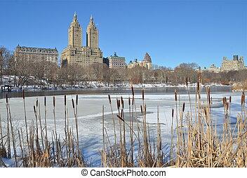 vinter, in, mellerst, park., färsk, york.
