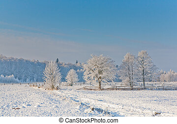 vinter landskab, hos, træer, sne, indpakket