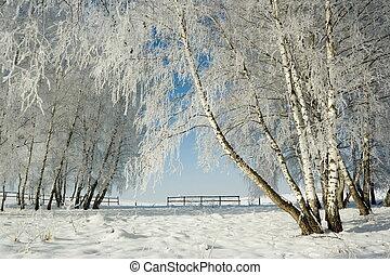 vinter landskab, og, træer
