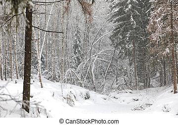 vinter landskap, in, snö, skog