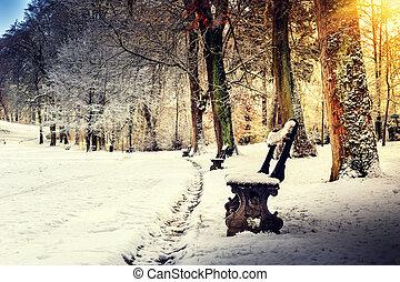 vinter landskap, med, snö täckte, parkera, gränd