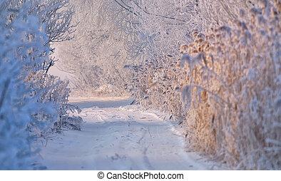 vinter, lantlig väg, höjande, med, snö