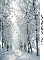 vinter, lantlig väg, hos, gryning