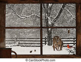 vinter, morgon, utsikt.