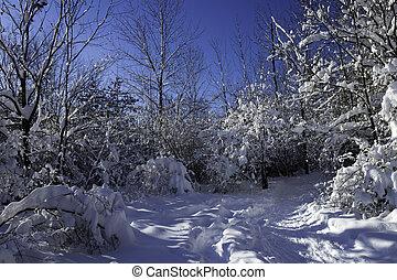 vinter scen